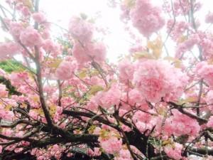 豊橋・豊川桃の木